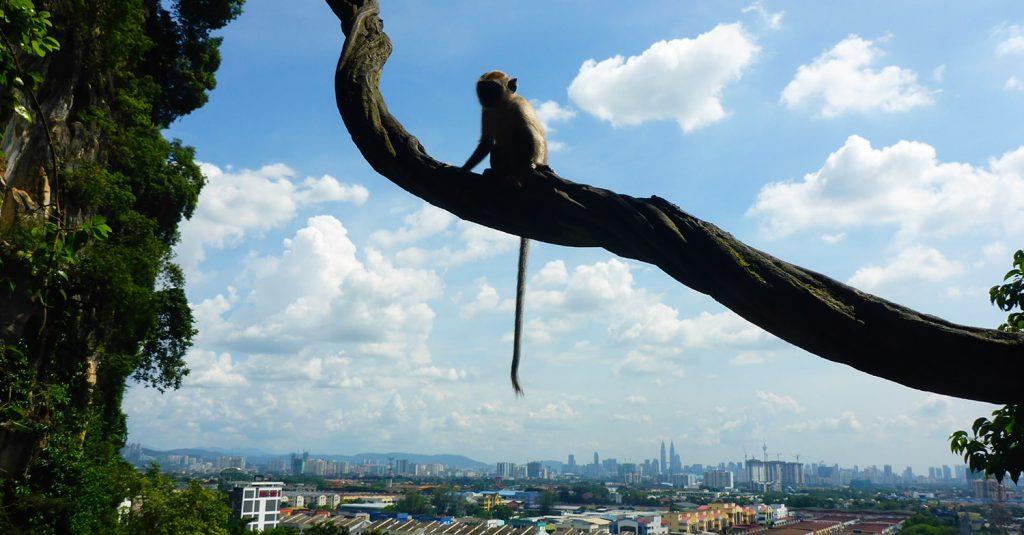 Monkey Watching Over Kuala Lumpur